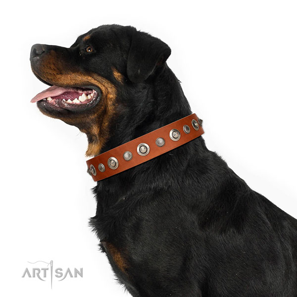 Durable full grain leather dog collar with designer decorations