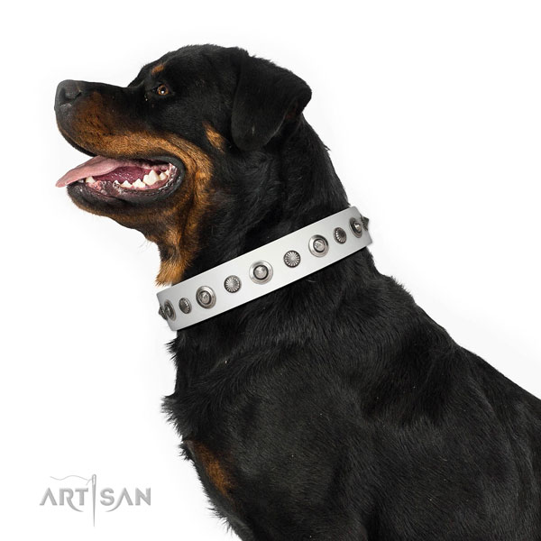 Natural leather collar with corrosion resistant traditional buckle for your stylish doggie