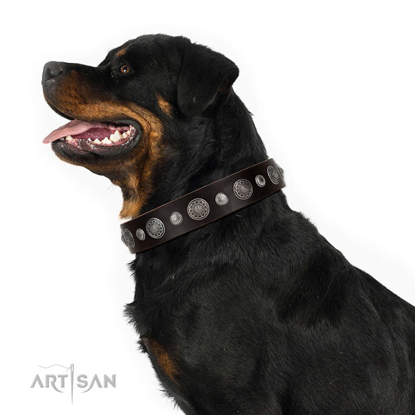 Natural leather collar with corrosion resistant traditional buckle for your stylish pet