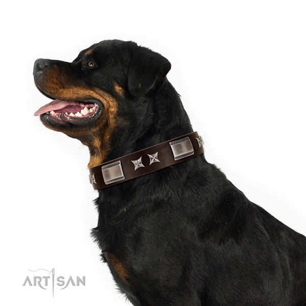Exceptional collar of full grain leather for your attractive pet