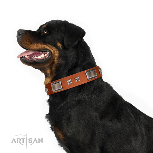 Walking soft full grain genuine leather dog collar with adornments