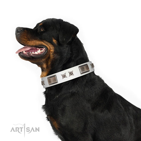 Everyday walking flexible leather dog collar with studs