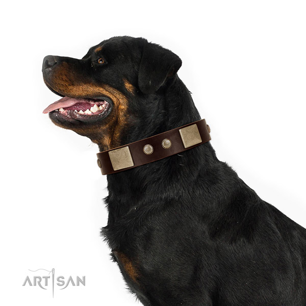 Rust-proof hardware on leather dog collar for handy use