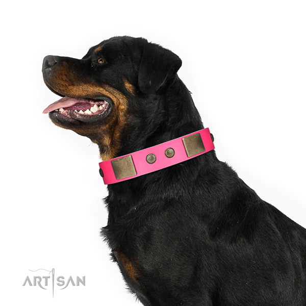 Rust resispinkt hardware on genuine leather dog collar for handy use