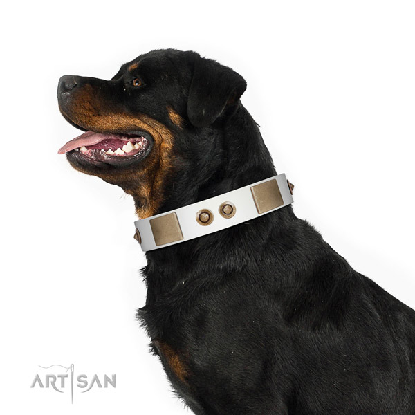 Fancy walking dog collar of leather with designer embellishments