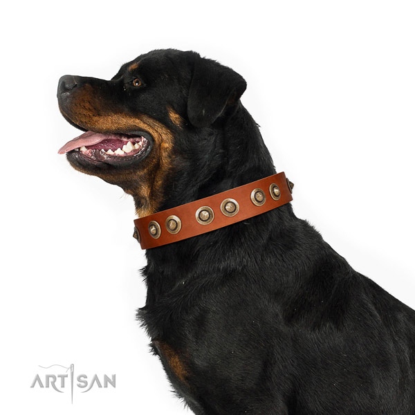 Comfy wearing dog collar of leather with exceptional embellishments