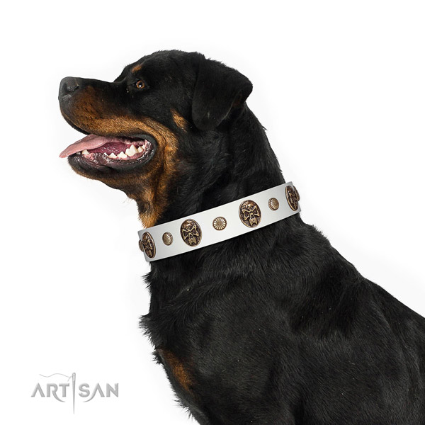 Leather dog collar with remarkable embellishments