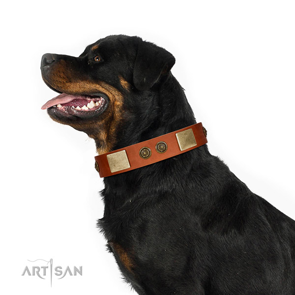 Handcrafted dog collar made for your handsome four-legged friend