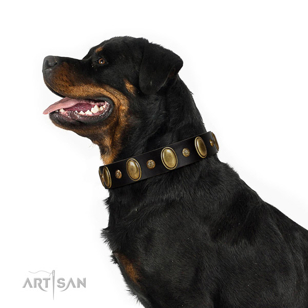 Full grain genuine leather dog collar of top notch material with stylish adornments