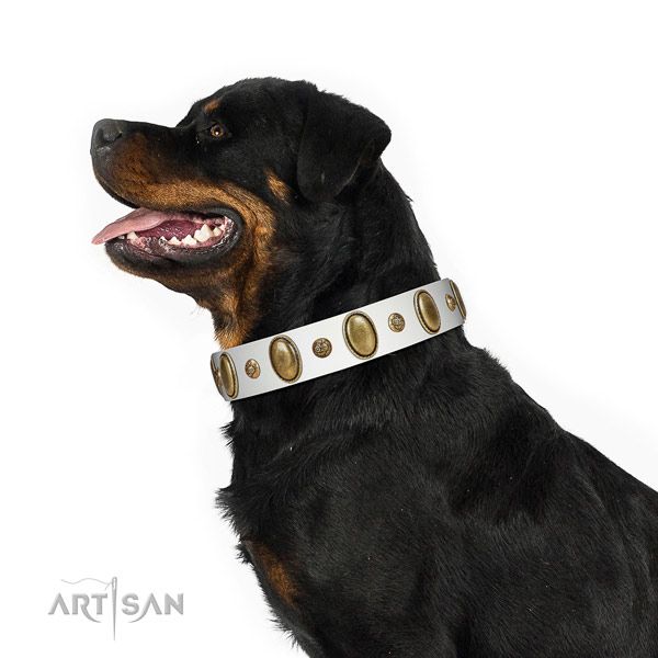 Exceptional leather dog collar with corrosion resistant buckle