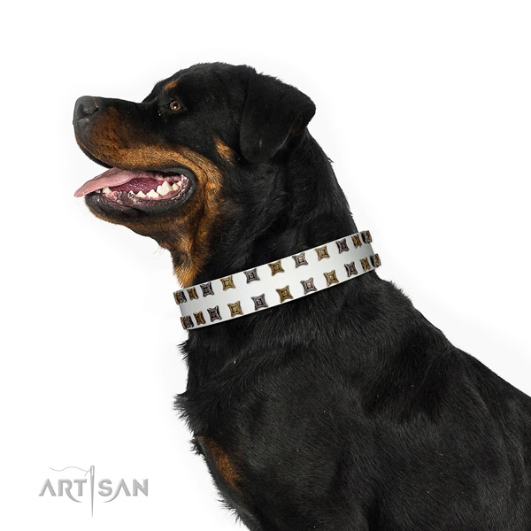 Quality full grain leather dog collar with adornments for your four-legged friend
