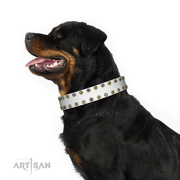 Incredible genuine leather dog collar with corrosion resistant adornments