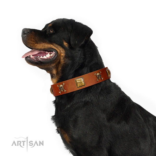 Inimitable genuine leather dog collar with rust resistant embellishments