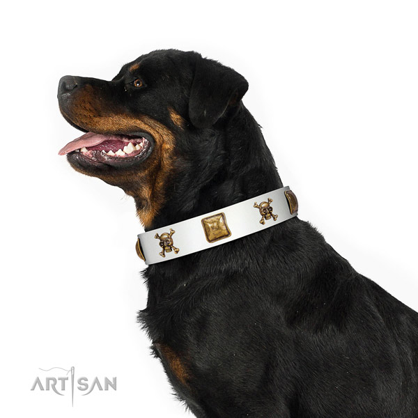 Fashionable genuine leather dog collar with reliable embellishments