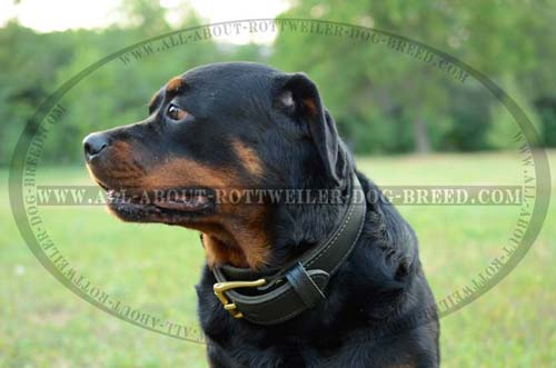 2 Ply Leather Dog Collar for Rottweiler Effective Training