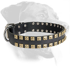 Leather Rottweiler Collar with Stylish Brass Buckle