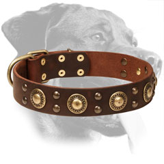 Genuine Leather Rottweiler Collar with Brass Decorations