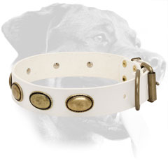 Rottweiler Collar Made of Leather with Brass Fittings