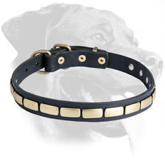 Leather Rottweiler Collar Decorated with Brass Plates