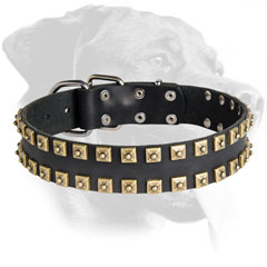 Leather Rottweiler Collar Decorated with Brass Studs