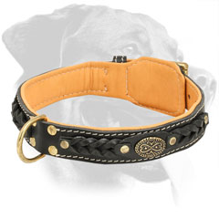 Designer Leather Rottweiler Collar Padded with Soft Nappa