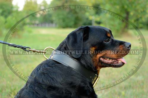 Multi Functional Leather Rottweiler Collar for with Brass D-Ring