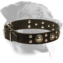 Genuine Leather Rottweiler Collar with Mixed Decorations