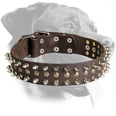Leather Rottweiler Collar Decorated with Mixed Elements