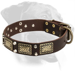 Leather Rottweiler Collar Decorated with Nickel Stones