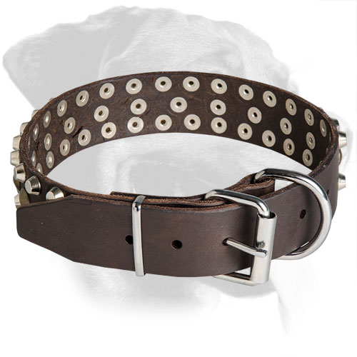 Leather Rottweiler Collar with Shining Nickel Fittings