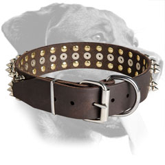 Leather Rottweiler Collar Equipped with Nickel Hardware
