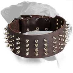 Leather Rottweiler Collar Decorated with Nickel Spikes