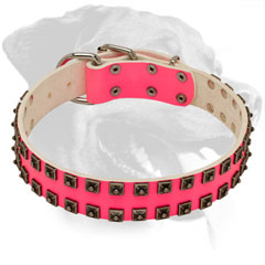 Leather Rottweiler Collar Decorated with Nickel Studs
