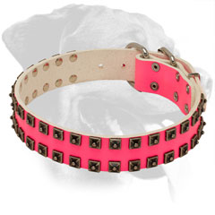 Pink Rottweiler Collar Made of Leather