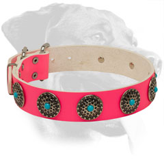 Pink Leather Dog Collar for Rottweiler with Nickel Plated Circles