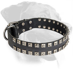Leather Rottweiler Collar with Riveted Brass Decorations