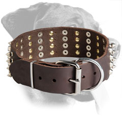 Leather Rottweiler Collar with Polished Buckle and D-Ring
