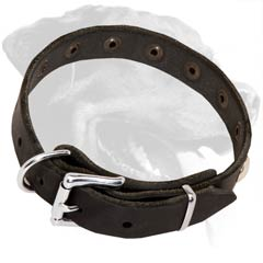 Thin Leather Collar for Rottweiler with Reliable Nickel Hardware