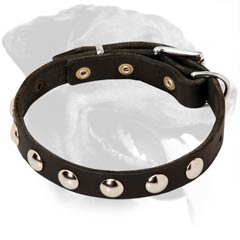 Walking Leather Rottweiler Collar with Hand Set Nickel Studs