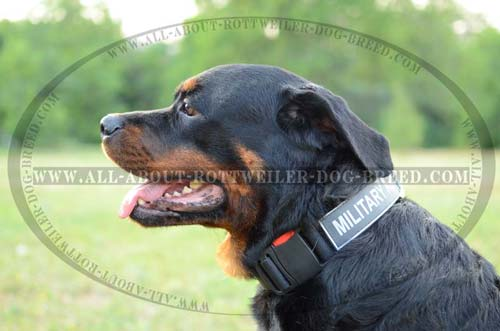 All Weather Nylon Rottweiler Collar with Quick Release Buckle and ID Patches