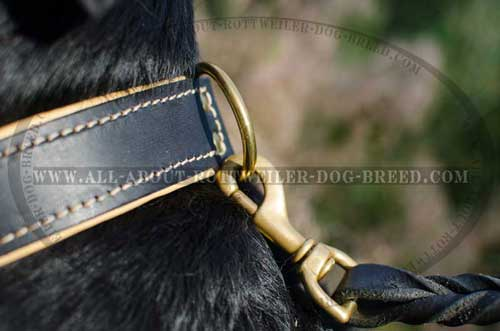 Rottweiler Padded Leather Collar with Brass D-ring