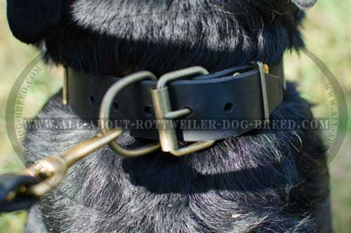 Beautiful Fittings of the Rottweiler Plated Leather Collar