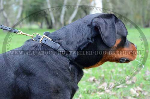 Everyday Braided Leather Dog Collar for Rottweiler