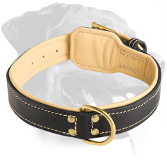 Rottweiler Breed Nappa Padded Leather Collar