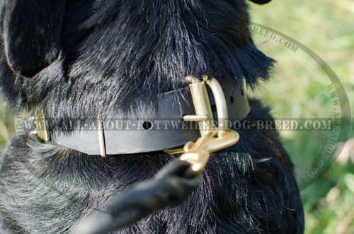 Strong  Brass Hardware of Rottweiler Leather Collar