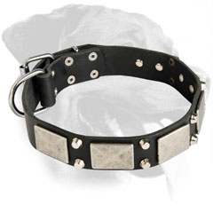 Exclusive Rottweiler Decorated Leather Collar