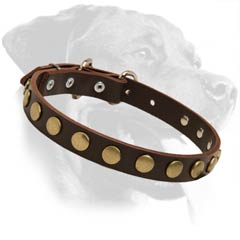 Quality Rottweiler Leather Dog Collar