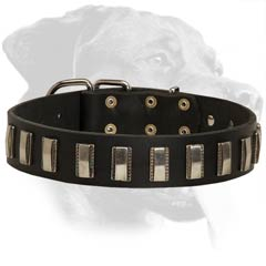 Rottweiler Leather Dog Collar with vertical plates