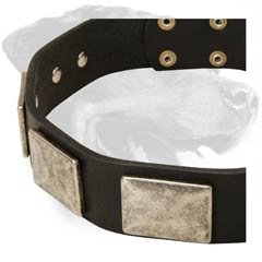 Rottweiler Leather Dog Collar with nickel plates