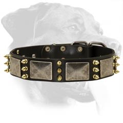 War Rottweiler Leather Dog Collar